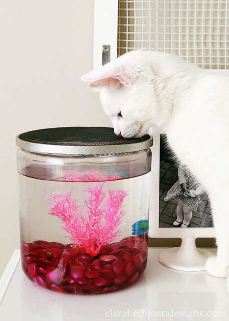 Fish Bowl Cat Cover