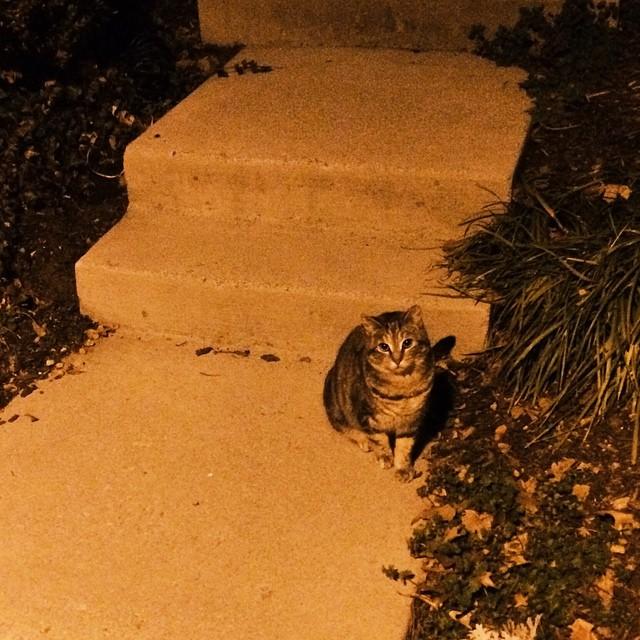 a cat in the night, a night cat