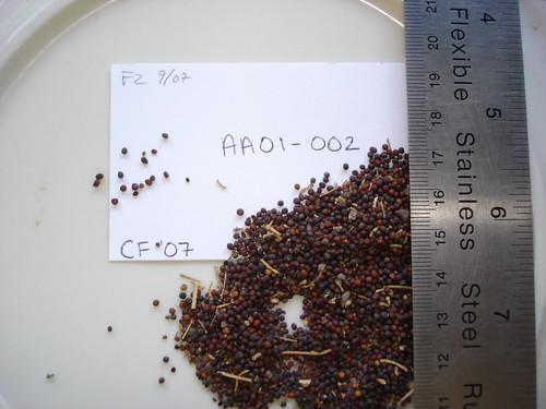 AA01-002 CF07 S5