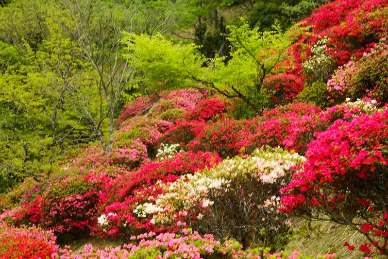2014-05-04_01075_九州登山旅行.jpg