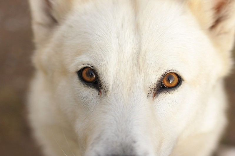 Beowulf eyes