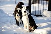 Snowhound(s)