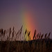 Rainbow by David Bembic