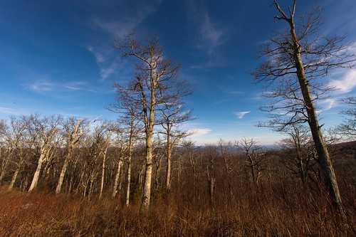 Along the very short section of the Blue Ridge Parkway I traveled there were plenty of scenic overlooks, without much of a grand view, but these trees still proved interesting when taken from a low angle with a 14-24mm, 1/125 @ f22, ISO 200