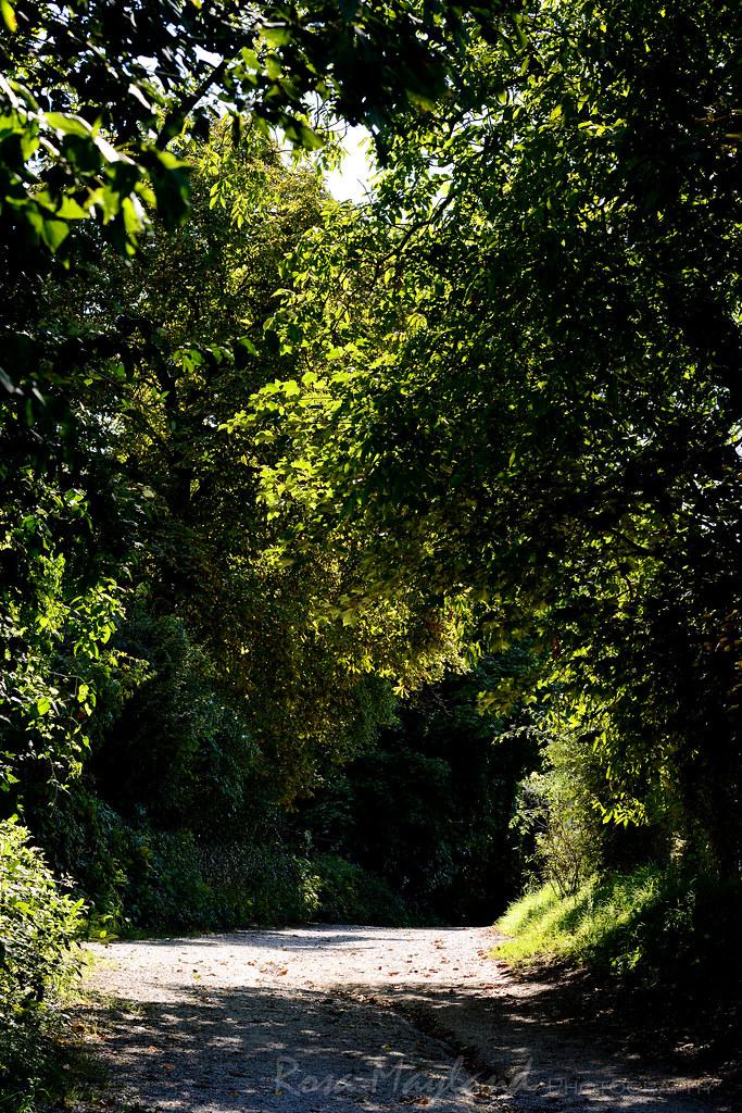 Summer - Geneva  Countryside