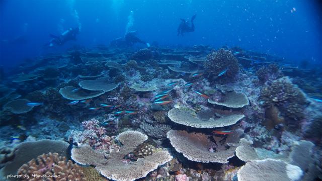 サンゴもキレイでしたね♪ 色があればもっとよかった!