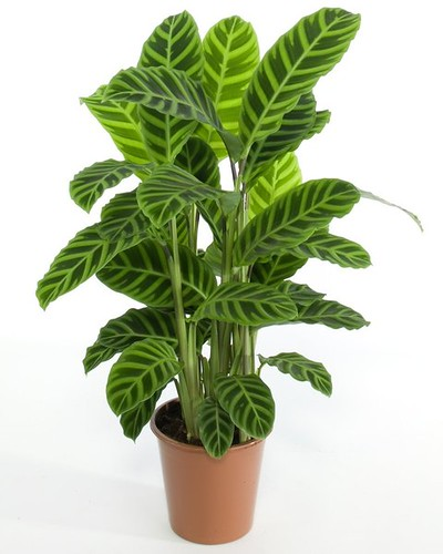 vegetacion artificial