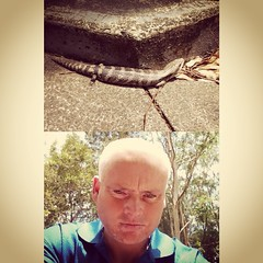 Almost stood on this a minute ago #blue-tonguelizard at Tea Gardens #frontback @frontbackapp