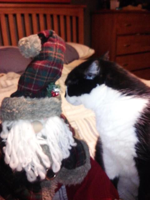 LJ the Christmas Cat