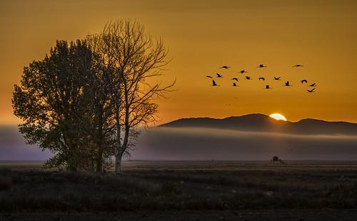 lake sunrise landscape dawn alba paisaje paissatge autofocus gallocanta aragón greatphotographers aragó albada sortidadesol goldcollection salidadesol d7000 lagunagallocanta llacunagallocanta