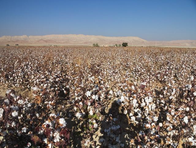 Südiran: Baumwolle