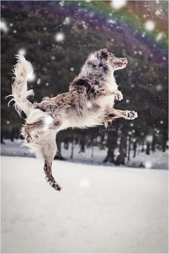 Kjara Kocbek Animal Photography - Page 5 16181493296_f3cb54c44d