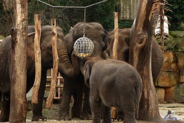 Tierpark Berlin 10.01.2014 172