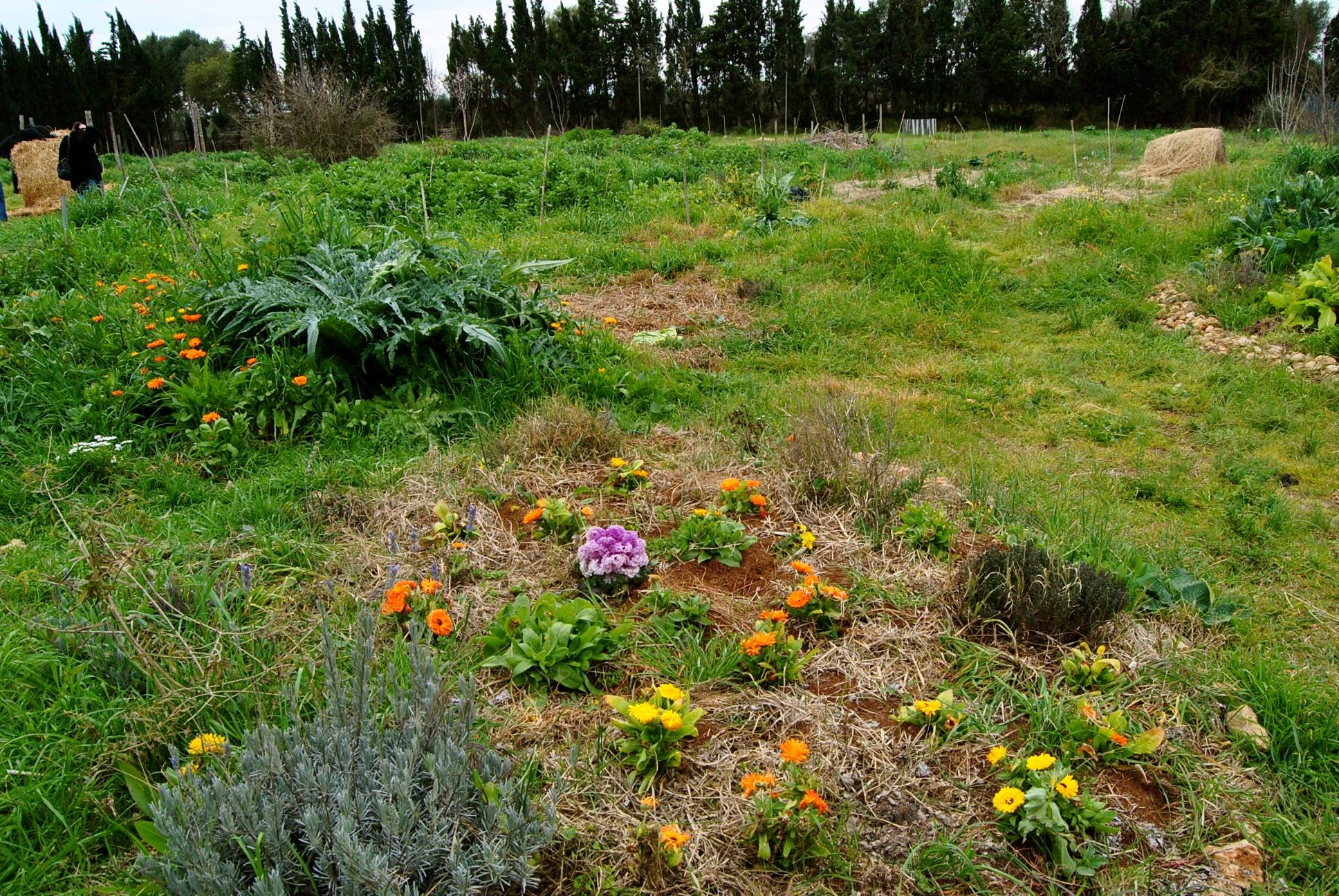 Visita a la Granja orgánica Son Barrina.