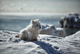 Winston: The Abominable Snow Dog!