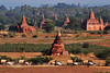 Ox-cart procession in front of the Bagan Pagodas