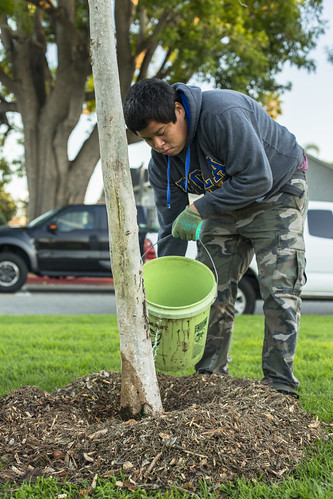 AC Trees Venice Tree Care - 2/23/15