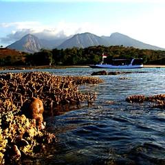 Taman Nasional #Baluran, Jawa Timur.