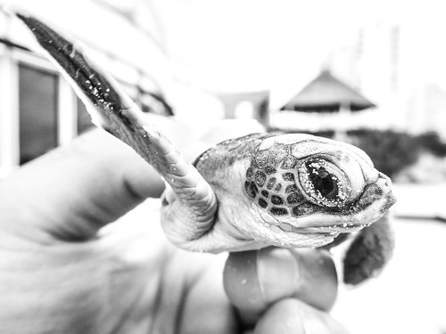 blackandwhite bw eye monochrome mexico lumix sand hand turtle panasonic cancun dmcft5