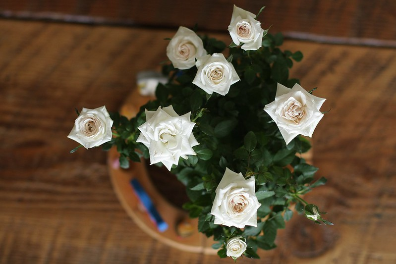 birthday roses (Valentines day clearance - $2.99!)