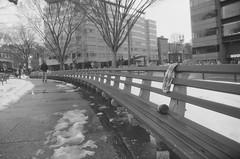 Dupont Circle Bench