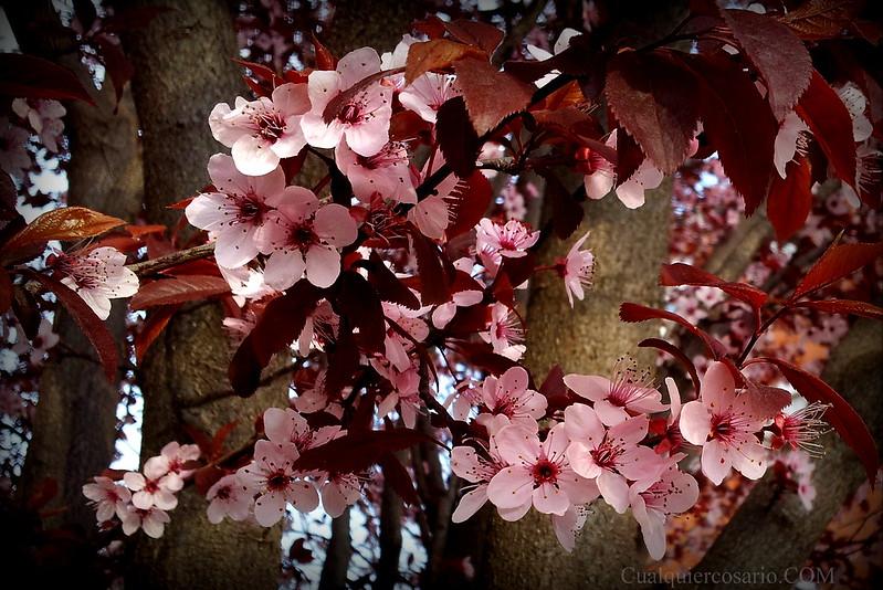 Despertar primaveral