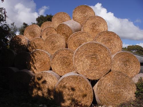 Lots of Hay, Hardwick
