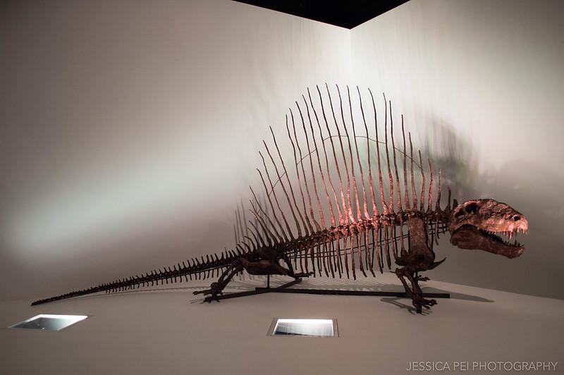 Diplocaulus Dinosaur Houston Museum Natural Science