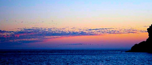 ocean sunset sea sky pelicans sonora clouds sunrise mexico formation seaofcortez