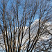 Sky and Limbs by spablab