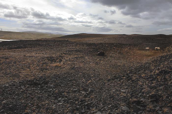Iceland_Spiegeleule_August2014 144