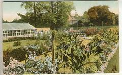 Mountsfield garden