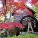 Tokushima Autumn