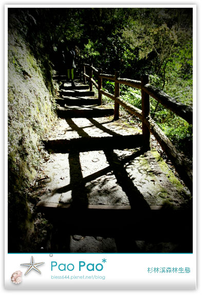 杉林溪森林生態