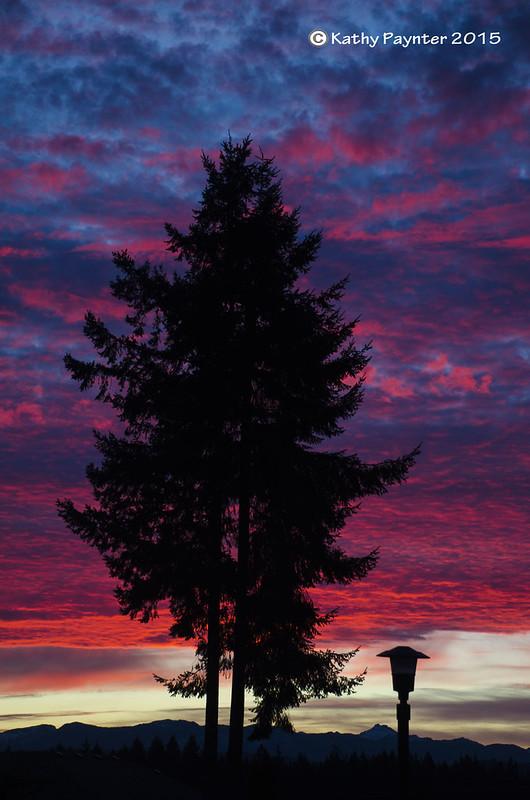 Sunset Tree 3333