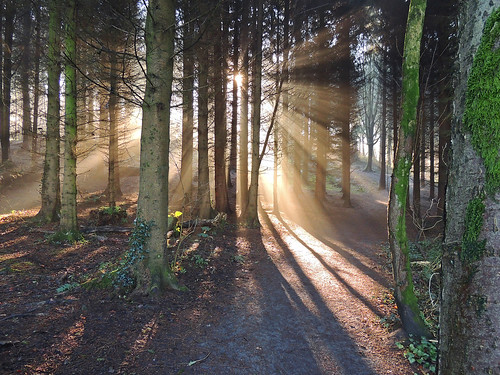 trees light sun forest nikon rays