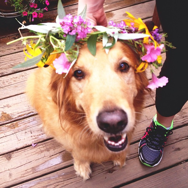 Dog days of summer.🐶💐🌼🌺🌷🌸🌻