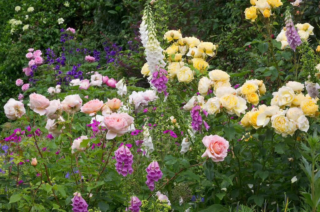 Cottage Garden Borders, Bedfordshire, UK | English Flower ...