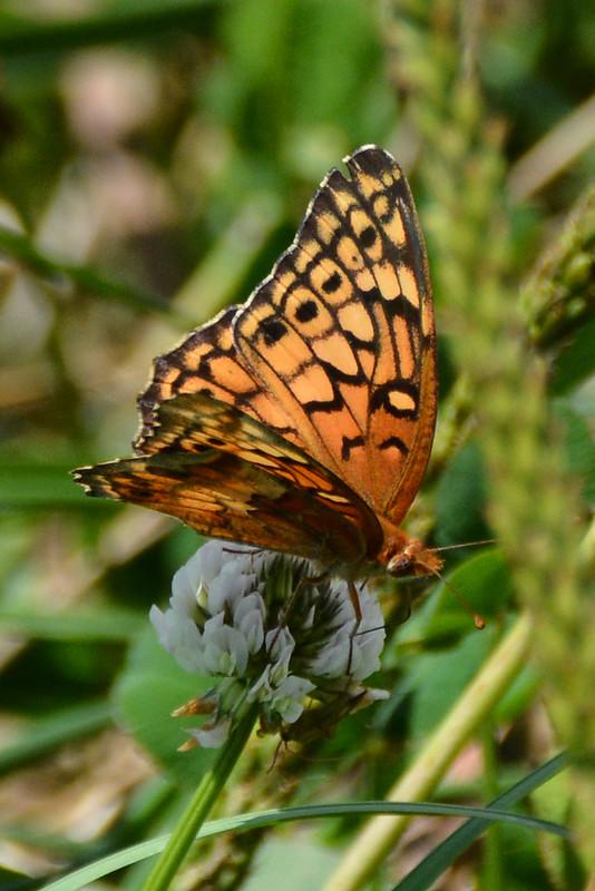 Butterfly 7.28.2014