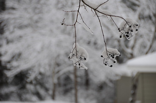 snow, photography