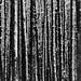 The Barcode by Steve Pigott