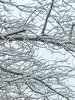 Snowing.   Again