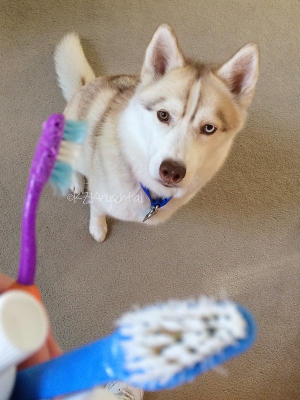 IMG_4495MagsToothbrushes
