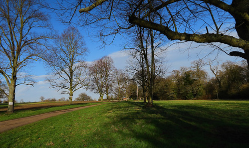 Late Afternoon in Bromham Park, Bedfordshire