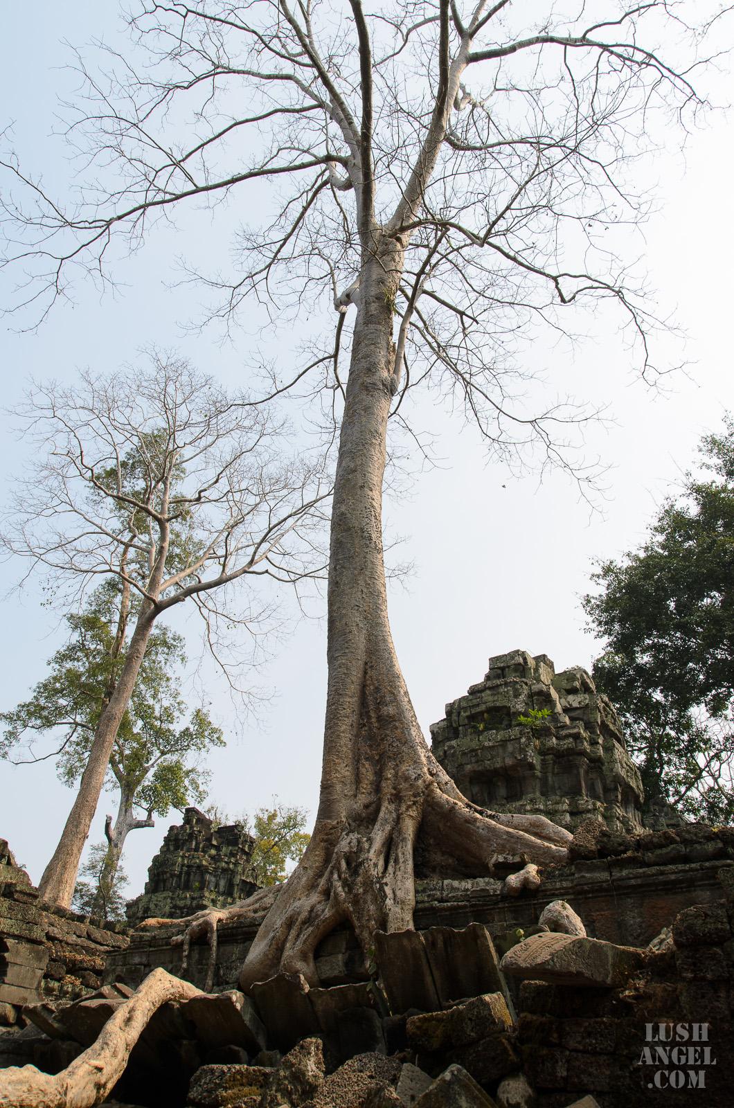 cambodia-siem-reap-19