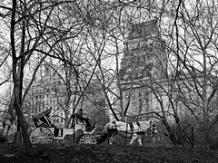 Carriage in Central Park