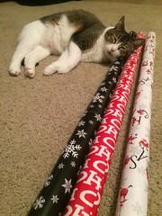 Georgi in the Christmas spirit