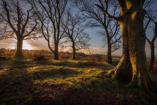 trees sunrise dawn scotland glasgow cathkinbraes nikond800 nikonafsnikkor1635mm14gedvr