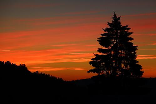 sunset shadow sky tree colors silhouette pinetree pine switzerland colorful swiss fir saignelégier franchesmontagnes