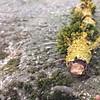 Pilzstamm by finja08062008